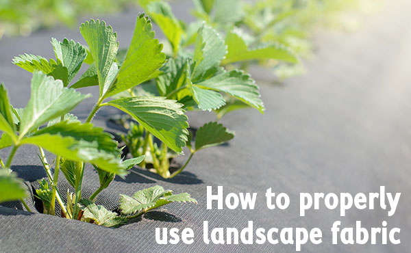 How to properly use landscape fabric