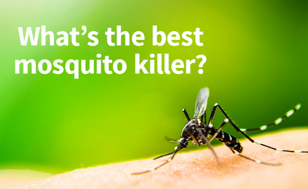 What's the best mosquito killer?